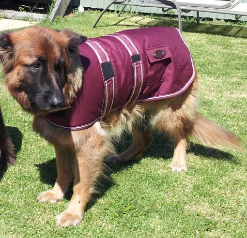 Dog Jacket Waterproof Large