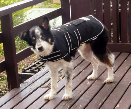 Water Proof Dog Jacket 55cm