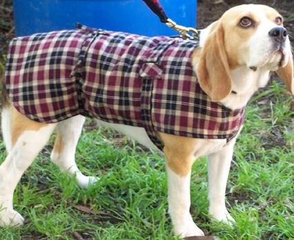Dog Jacket Cotswool Medium