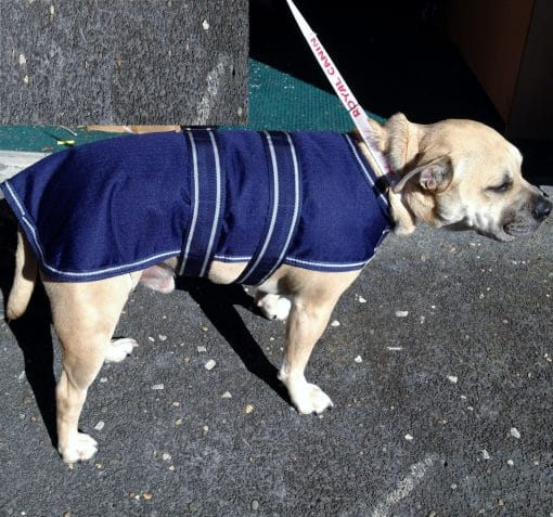 Dog Jacket Waterproof Xmed