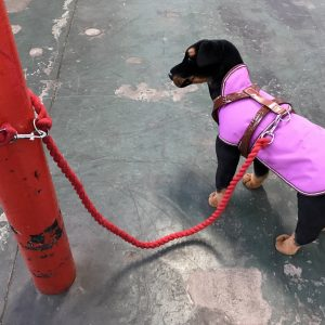 Dog Lead Multipurpose Cotton