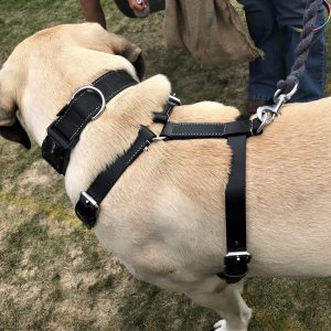 Dog Harness Tracking Working