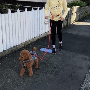 Multipurpose Lead S&M Dogs