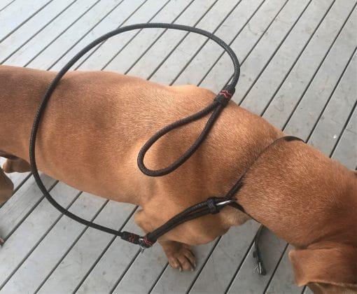 Non Choking Leather Collar Lead
